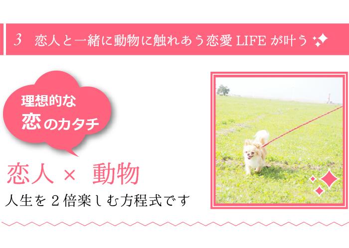 人気の理由③恋人と一緒に動物に触れあう恋愛LIFEが叶います!