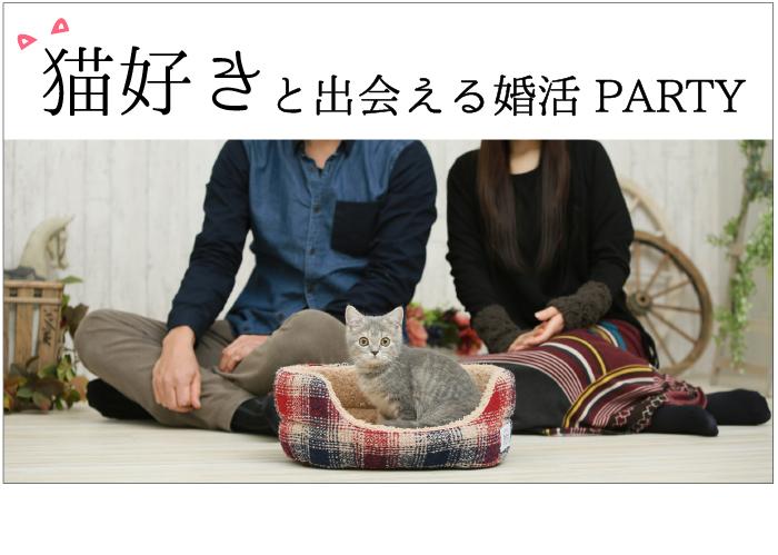 猫好きな異性と出会える婚活・お見合いパーティーのご案内です。