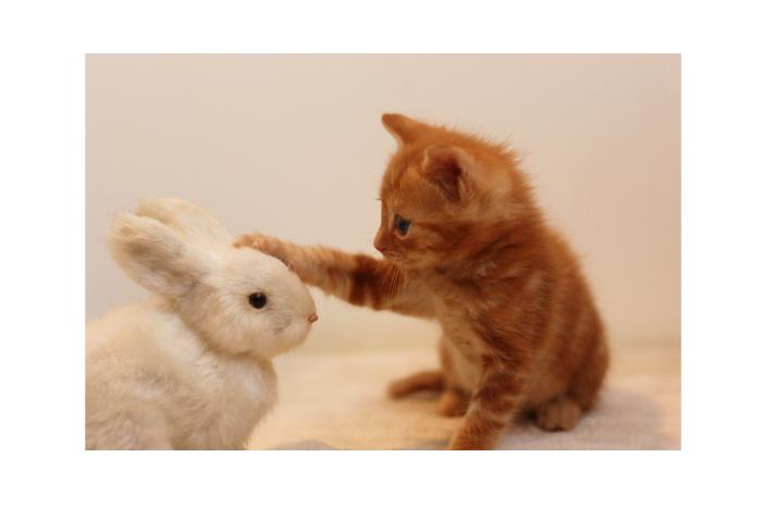 めちゃくちゃ楽しいネコ好き同士の出逢い