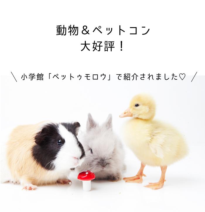 大人気の動物&ペットコン!