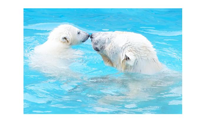 動物園・水族館好き同士が集まるから、かなり楽しい!